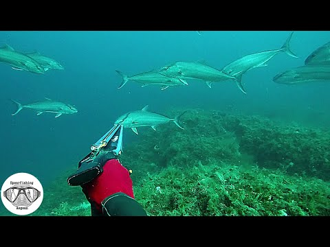 An Unexpected Day At The Sea   Spearfishing The Aegean 🇬🇷 ✔