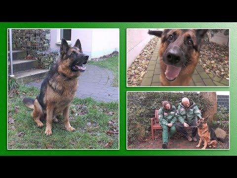 Hundevermittlung - Dez. 2017 / Jan. 2018 (Tierheim Hannover TV)