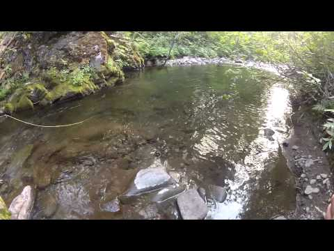 Fly Fishing The North Fork Teanaway And Tributaries