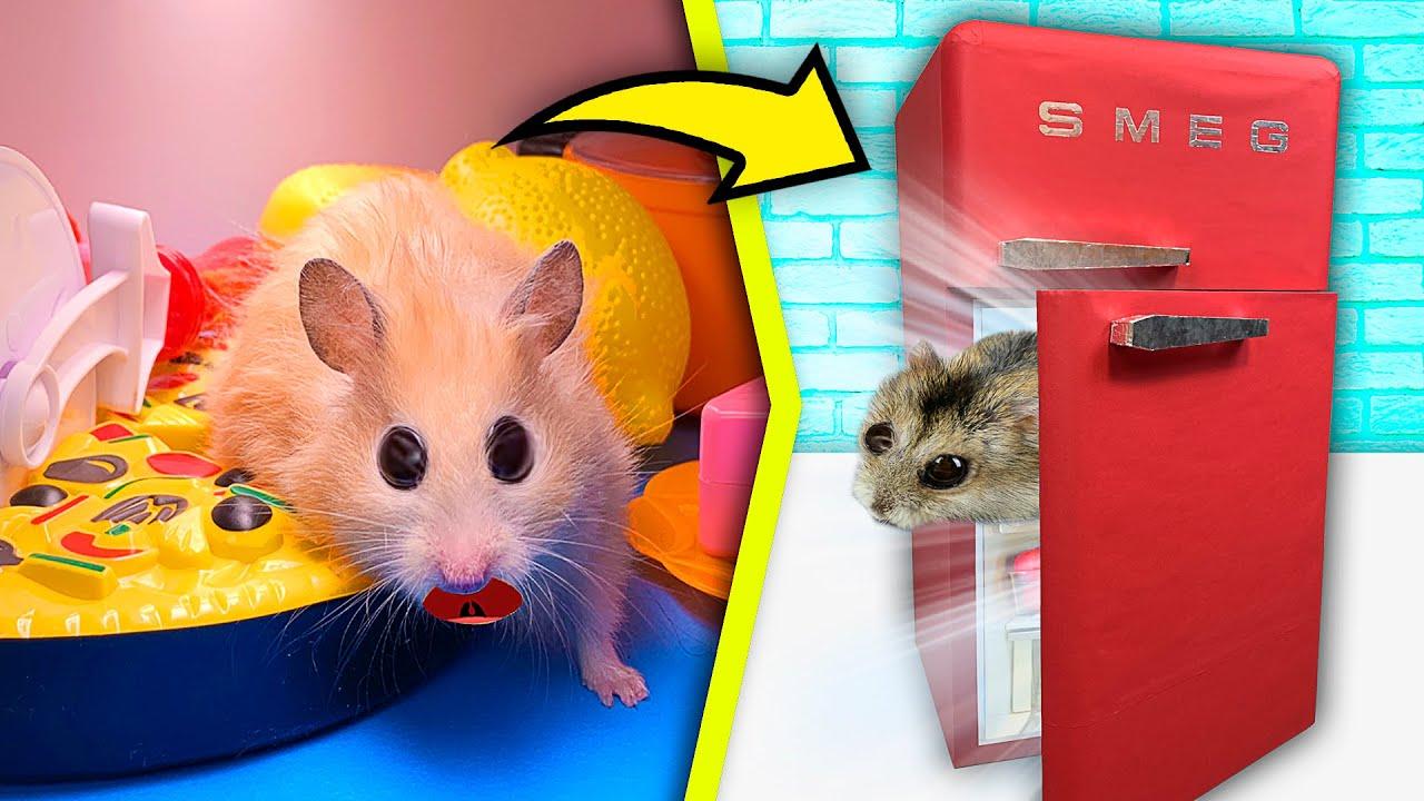 Hamster in the Fridge! What will happen to him? | 7 storey maze fridge - Hamsters Show