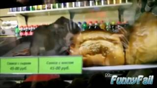 Нарезка Vine приколов издевательство животных над людьми! Хит Смеха 2016
