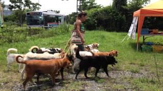 毎月第2第4日曜日に開催しているKDP(KanagawaDogProtection)の犬の譲渡...