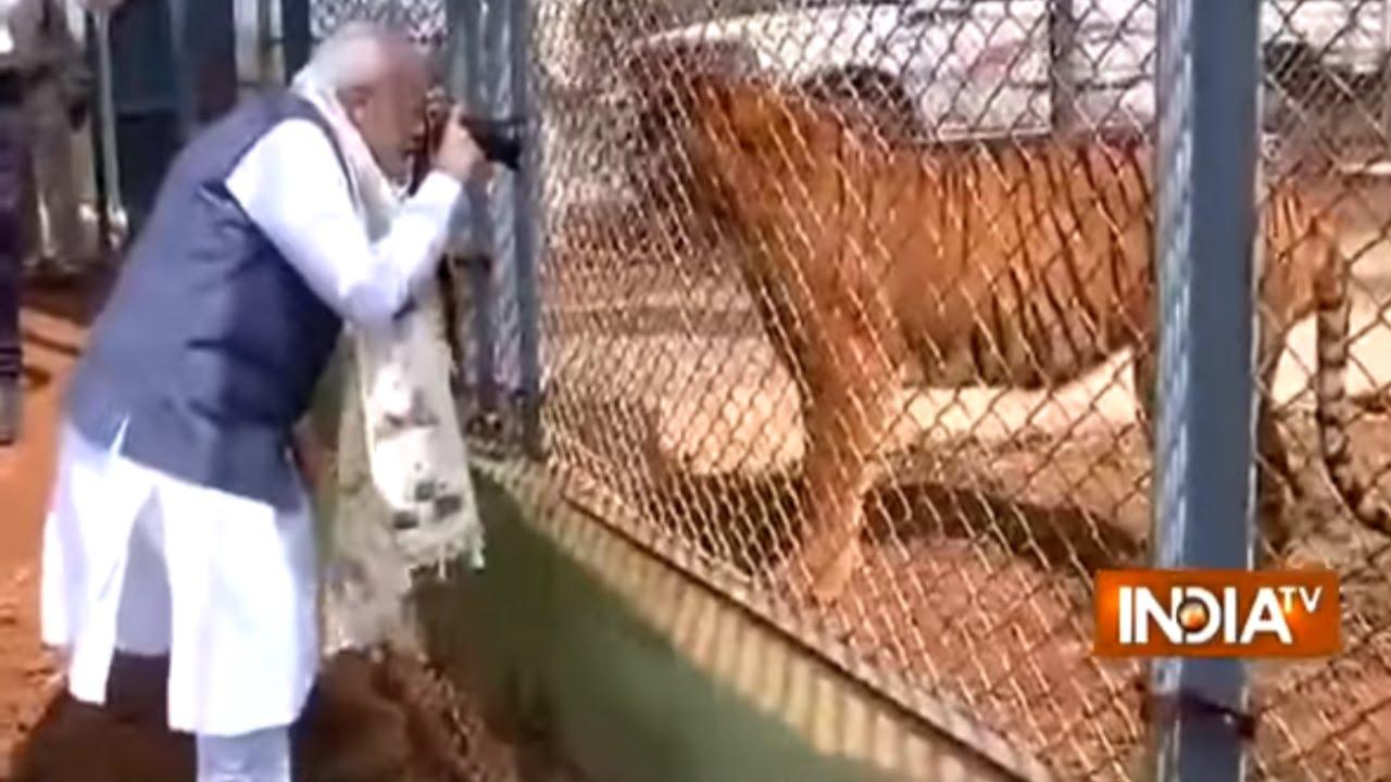 PM Modi Takes Photographs of Tiger During Jungle Safari in Naya Raipur