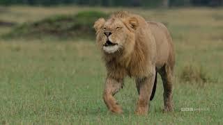 Wild Life Week | Begins Saturday, June 29 | BBC America