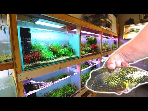 Breathtaking Hawaiian Fish Store Tour!