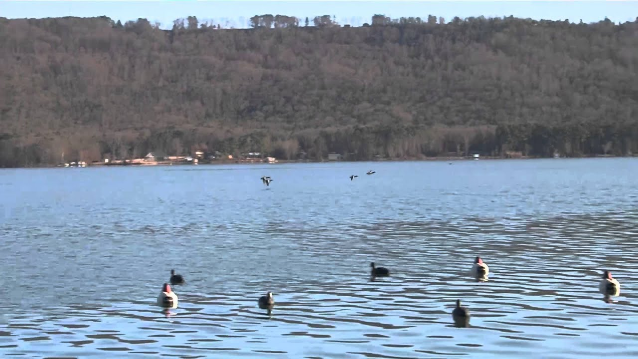 Citw 2015 e1 fort canvasback lake guntersville alabama for Missouri out of state fishing license