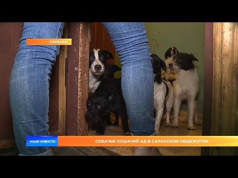 Вопрос: Можно ли домашних животных держать в общежитии?