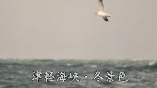 八代亜紀さんの歌唱で、津軽海峡・冬景色をお楽しみいただければ幸いです。