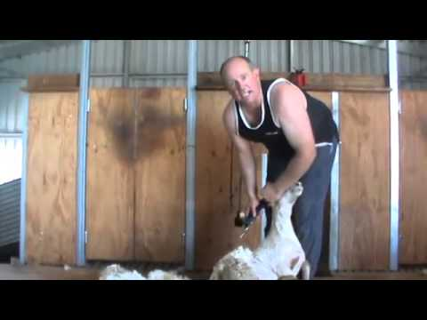 Shearing How long should a comb and cutter last when shearing, steps to avoid blunt gear YouTube