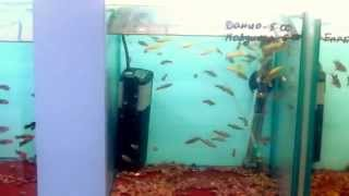 Выбор рыбок в зоомагазине(Мы наполняли небольшой аквариум. Выбор был невелик, но получилось неплохо. Потом покажу), 2015-01-15T20:54:16.000Z)
