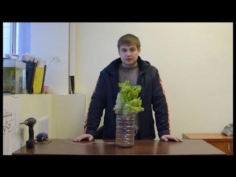Гидропоника сделай это сам. hydroponics