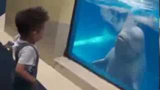 Beluga Whale Messes with Little Kid