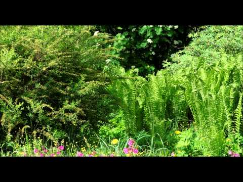 ❀ Sound Therapy ~ Summer Forest (7 HOURS continuous sound - no loop)