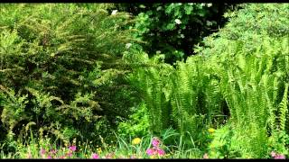 Sound Therapy ~ Summer Forest (7 HOURS continuous sound - no loop)