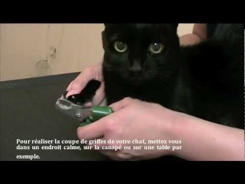 Comment couper les griffes de son chat youtube - Comment couper les griffes de son chat ...