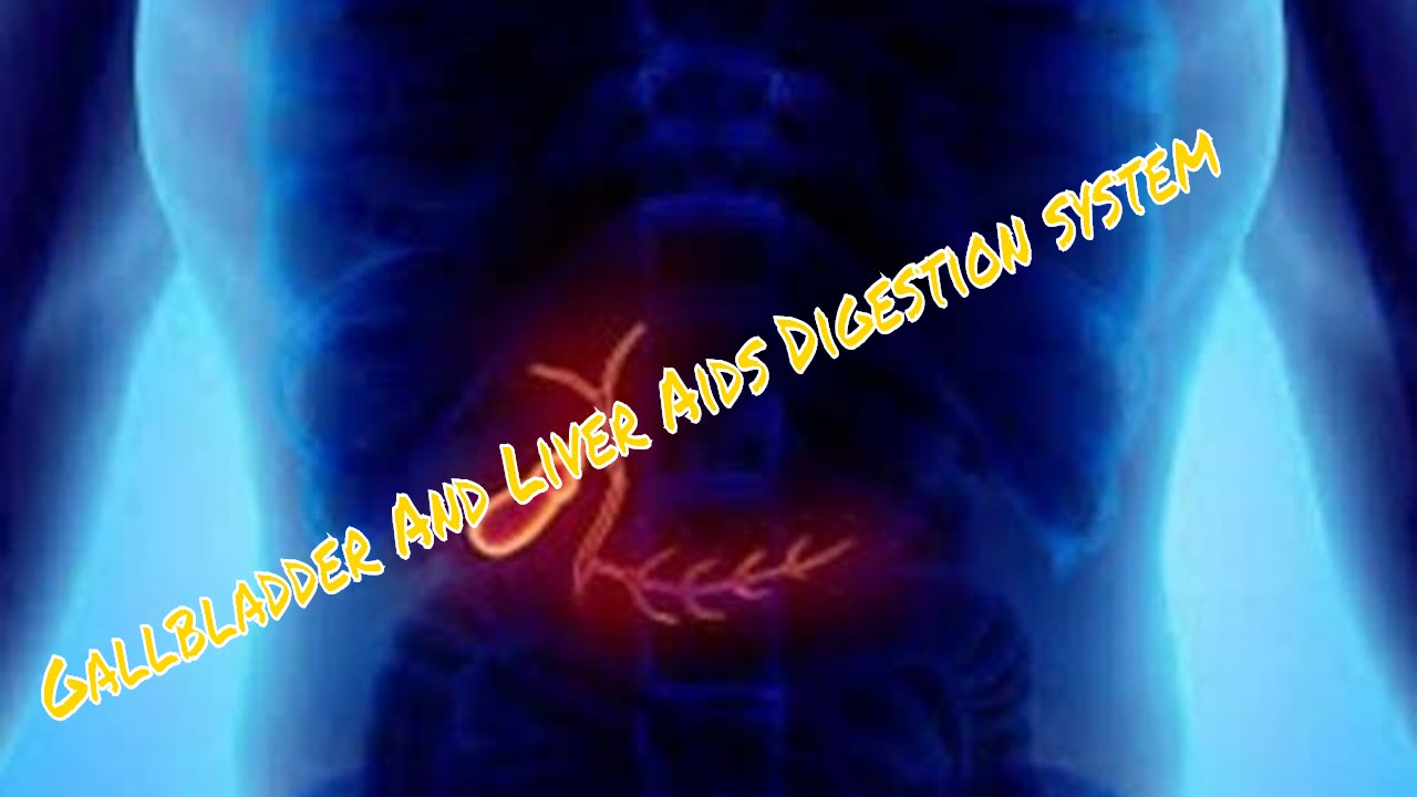 Gallbladder And Liver Function In Digestive System Youtube