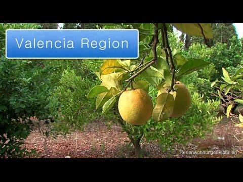 Valencia - Land der Orangen und Zitronen