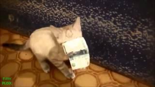 Zwierzaki nie mogąpowiedzieć nie  Kompilacja 2013 Śmieszne zwierzaki