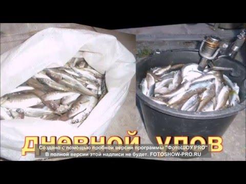 Рыбалка на удочку в новороссийске