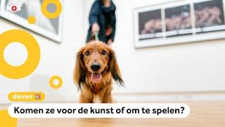 Deze honden gaan naar een museum