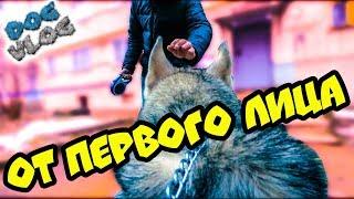 МОЙ ДЕНЬ ОТ ПЕРВОГО ЛИЦА (Хаски Бандит) Говорящая собака