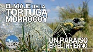 El Viaje de la Tortuga Morrocoy. Un Paraiso en el Infierno | Documental Completo - Planet Doc