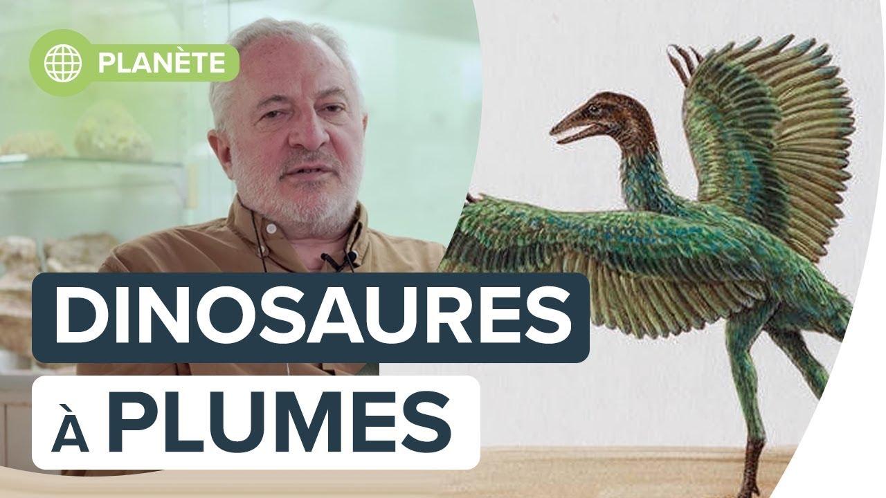 Les oiseaux sont-ils les derniers descendants des dinosaures ? | Interview de J-M Solichon | Futura