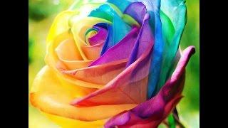Beautiful Flowers | Ten most  beautiful Flowers 2016