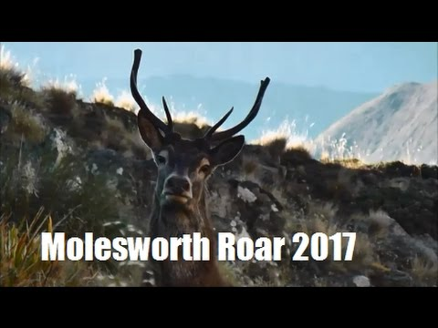 Molesworth Autumn Roar 2017 - A kiwi hunting and fishing adventure