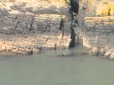 Seals of Cardigan Island