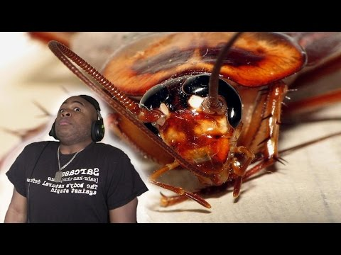 Shay Diddy - Man Accidentally SHOOTS Himself Trying To Kill COCKROACH!