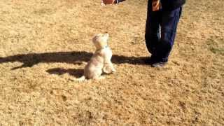 Obedient Paws Dog Training Virginia Beach