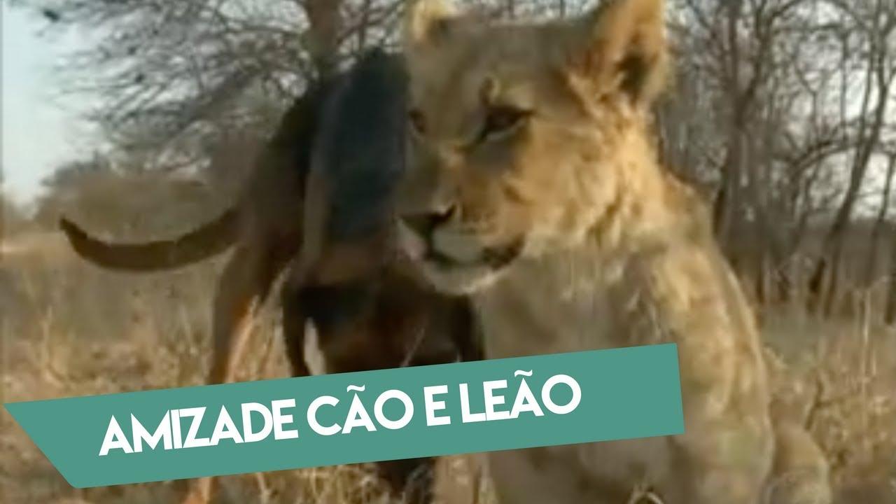 Amizade entre Cão e Leão