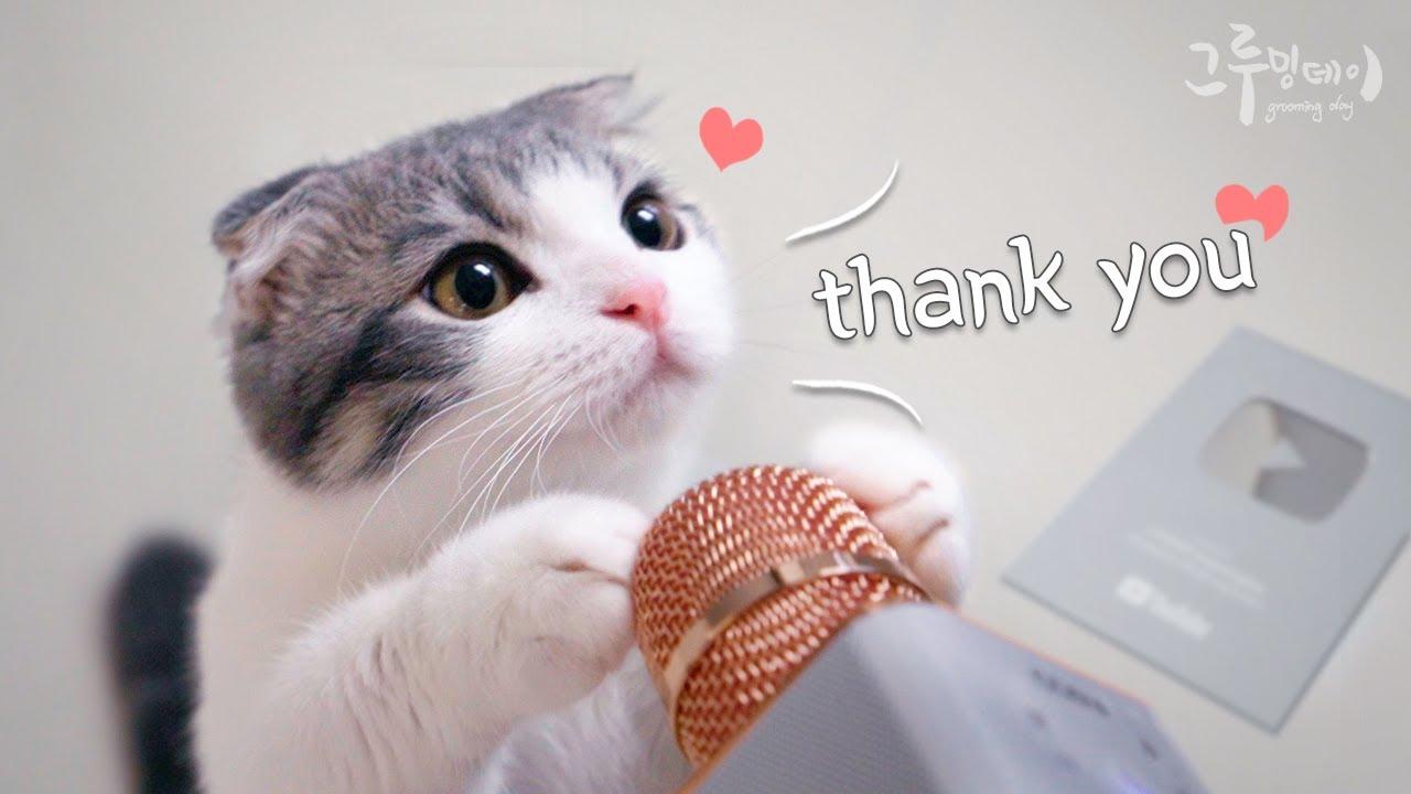 귀여운 고양이랑 유튜브 실버버튼 열어봐요!