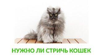Нужно ли стричь кошек. Ветеринарная клиника Био-Вет.