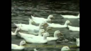 The Rascals - Groovin (Subtitulos)