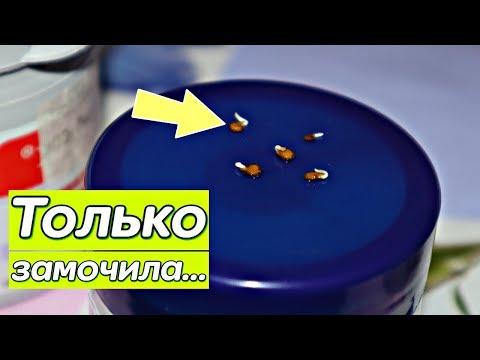 Вопрос: Как ускорить прорастание семян сладкого перца (см.)?