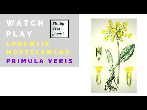 Lodewijk Mortelmans: Primula Veris (Cowslip)