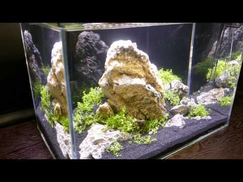 Freshwater Tank Setup - 7g (26L) Iwagumi Inspired Aquarium