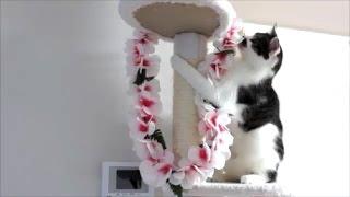 年末年始にハワイに行ってみたかったどろぼう猫。 やつ当たりしてます(...