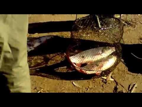 видео ловля язя на фидер
