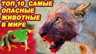 ТОП 10  Самые опасные животные в мире и на земле