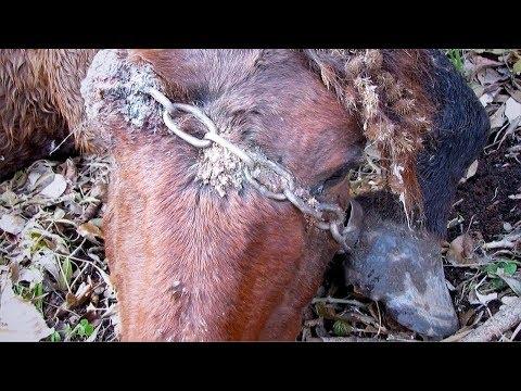 عثروا على حصان في الغابة مقيد بالسلاسل وعندما اقتربوا منه كانت المفاجأة  - نشر قبل 7 ساعة