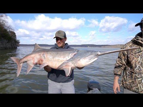 Catching MASSIVE Prehistoric Fish!?!?!