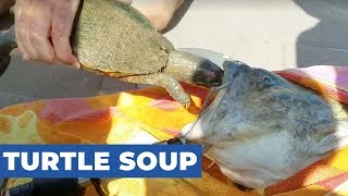 Family Rescues Turtle From Mouth Of Giant Catfish