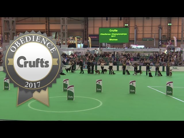 Obedience Championship - Bitches - Awards Presentation | Crufts 2017