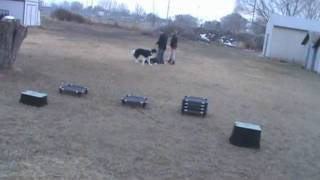 Dog Training Utah Bubba Pack Obedience Session Part 2