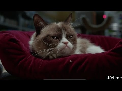 Grumpy Cat Movie  Makes Even Grinches Love Christmas