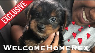 Picking Up Our Fur Baby Rex| YorkiePoo at Delta Cargo