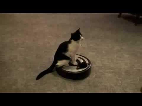 Cat On Vacuum Cleaner Youtube